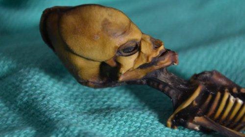 Estudo De Adn Resolve O Mistério Do Alien Do Atacama