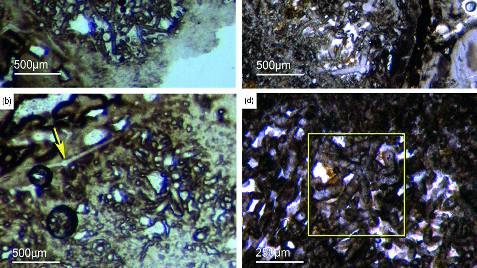 Fósseis das Esponjas encontradas em Fontanarejo