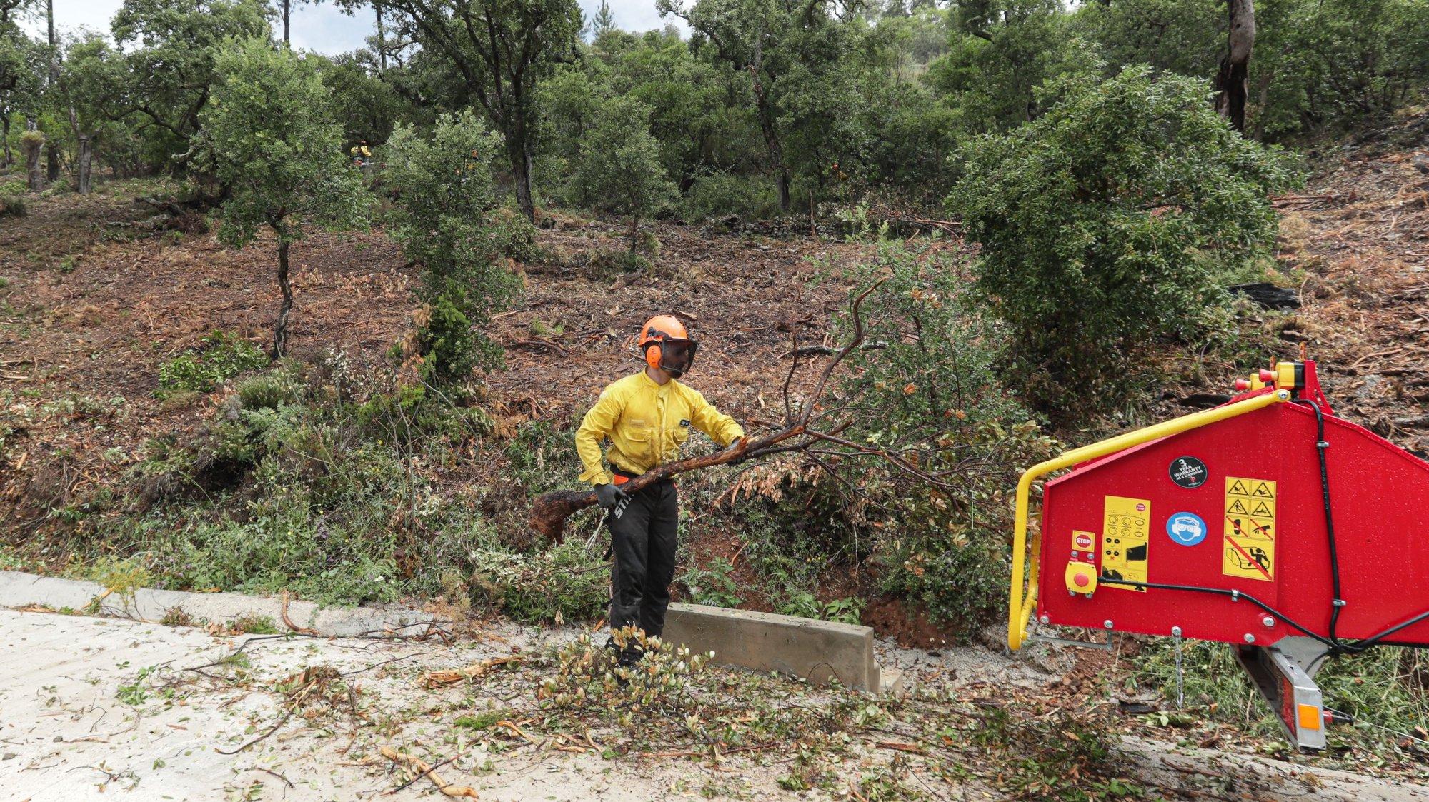 """Um elemento da equipa de sapadores florestais da Associação de Produtores Florestais da Serra do Caldeirão e da Equipa Municipal de Intervenção Florestal faz a limpeza da vegetação e do mato entre as árvores, assim como a """"desramação"""", retirando todos os troncos e """"evitando que as copas se toquem"""" junto às habitações, em Loulé, 04 de junho de 2020. A poucos dias do início do verão ainda há equipas de sapadores na serra algarvia em ações de limpeza para garantir a criação de faixas de segurança e travar a propagação de incêndios, protegendo a floresta e as populações. (ACOMPANHA TEXTO DA LUSA DO DIA 09 DE JUNHO DE 2020). LUÍS FORRA/LUSA"""
