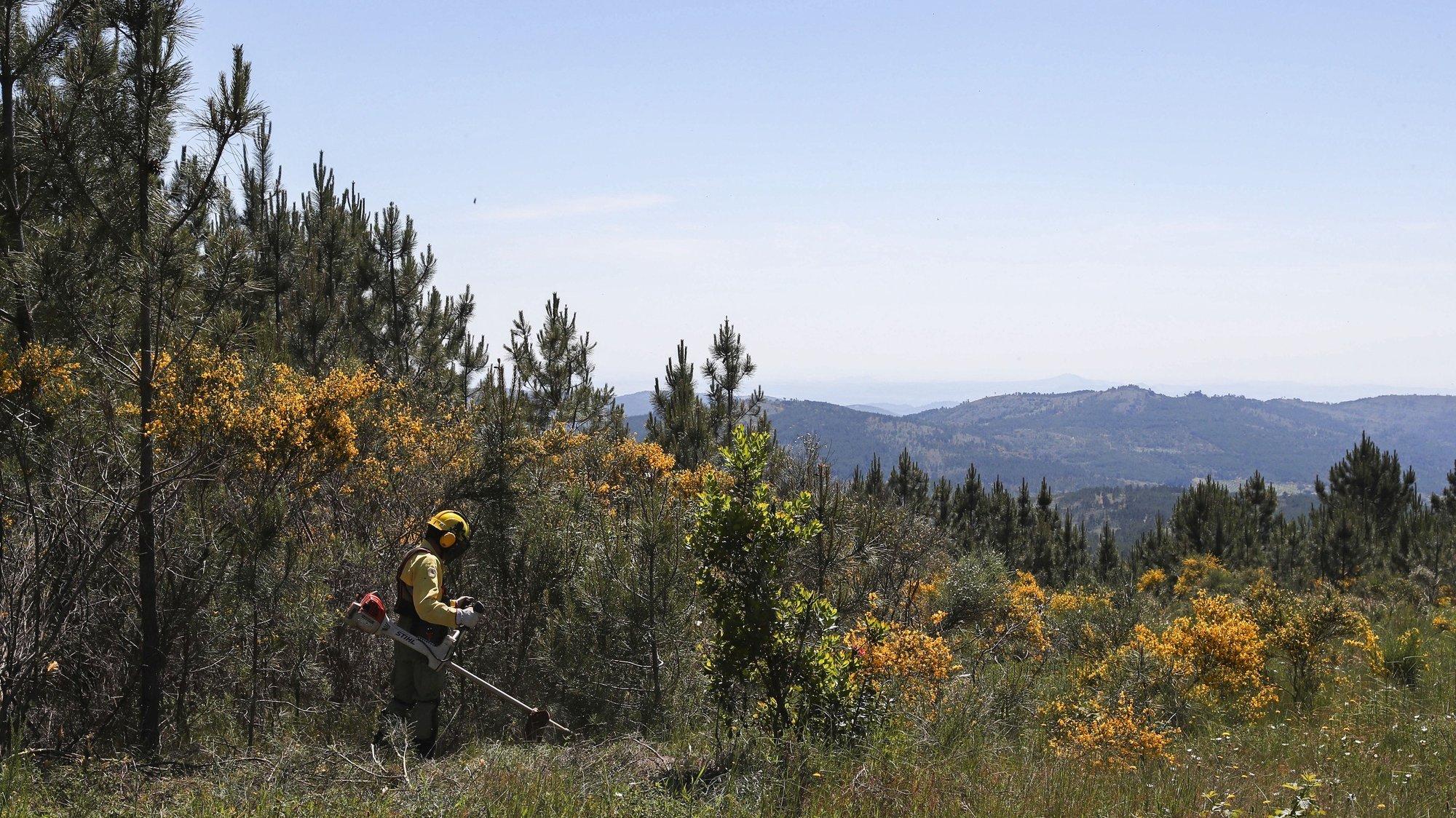 Sapadores florestais procedem à limpeza do terreno, durante os trabalhos de intervenção das redes de faixas de gestão de combustível associadas à rede viária, na Serra de São Mamede, em Marvão, 22 de maio de 2020. NUNO VEIGA/LUSA