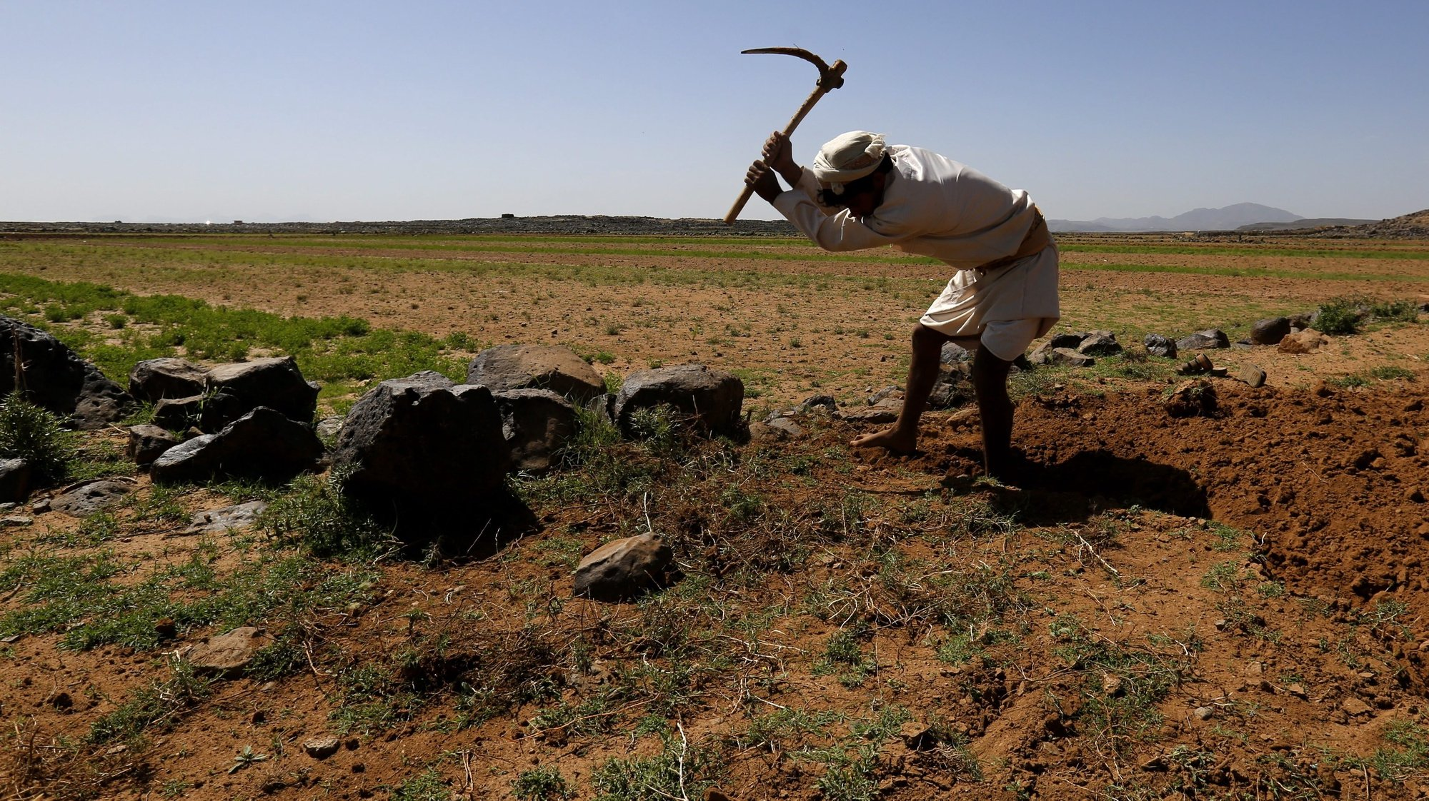 epa05304407 A Yemeni farmer uses a grubber to break the soil of dry farmland near Hamdan district on the outskirts of Sana'a, Yemen, 13 May 2016. According to reports, the Food and Agriculture Organization (FAO) has reported around 14.4 million people, over half of Yemen's population, urgently need food security and livelihood assistance, after more than a year of war between Yemen's Saudi-backed government and Houthi rebels, pushing the war-affected country to the brink of humanitarian disaster.  EPA/YAHYA ARHAB