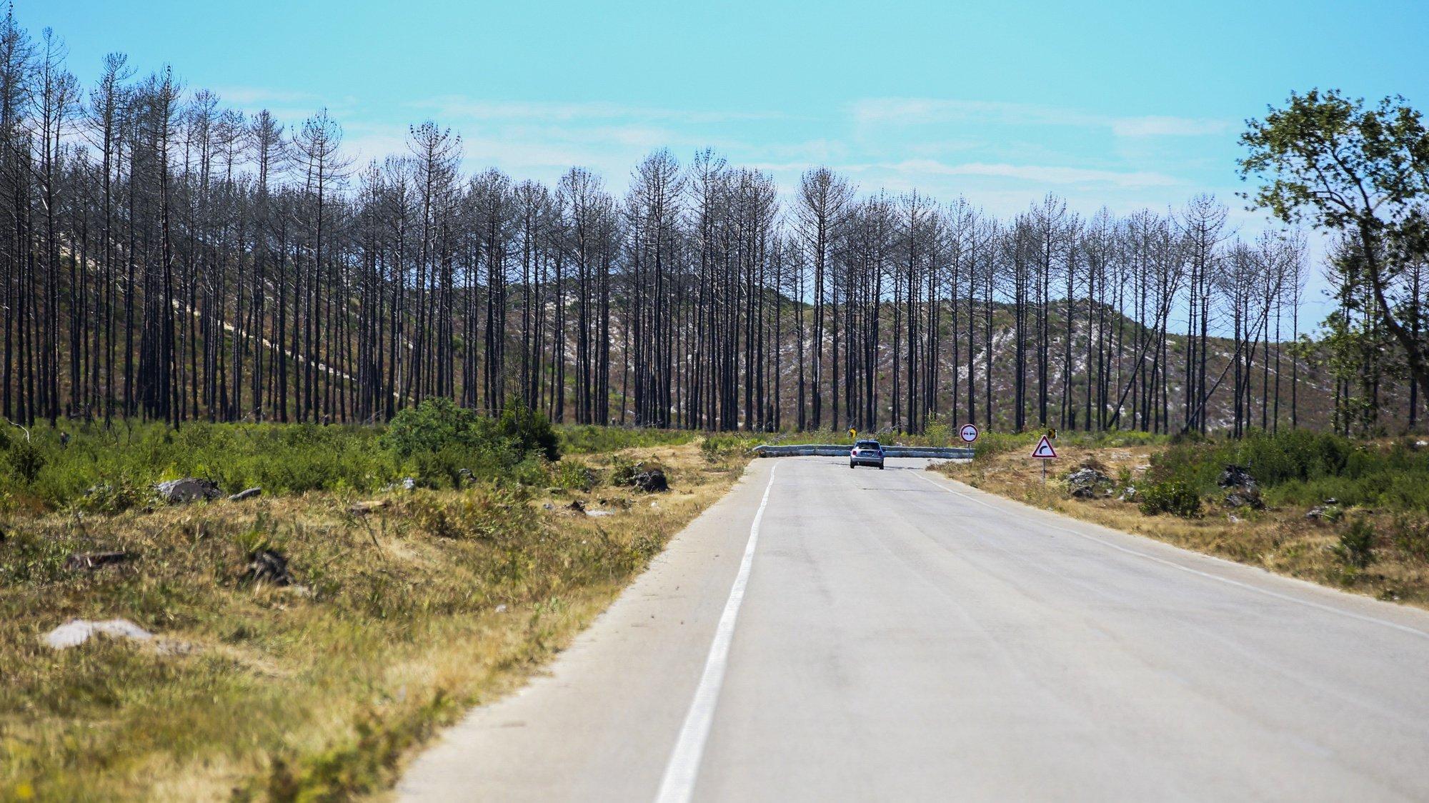 Vista do Pinhal de Leiria, em Vieira de Leiria, 31 de julho 2020. Há milhares de pinheiros a crescer na Mata Nacional de Leiria quase três anos após o incêndio que destruiu quase toda a floresta do concelho da Marinha Grande, apontando o ICNF - Instituto da Conservação da Natureza e das Florestas para uma taxa de sucesso de regeneração superior a 80%. (ACOMPANHA TEXTO DE 9 DE AGOSTO DE 2020). PAULO CUNHA /LUSA