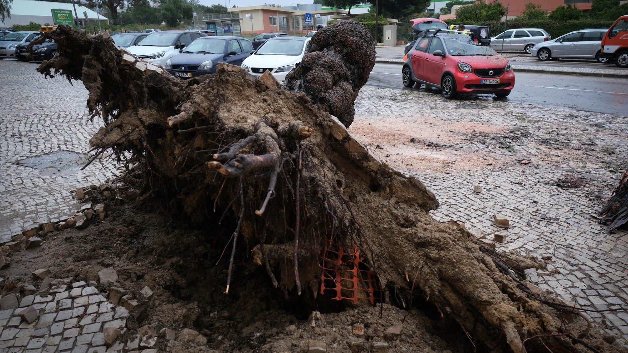 Quedas de árvores, estruturas e veículos danificados pela depressão Bárbara em Setúbal, 20 de outubro de 2020. A depressão Bárbara vai atravessar as regiões Norte e Centro durante a tarde de hoje, verificando-se chuva intensa em oito distritos e vento forte em todo o território nacional, segundo o Instituto Português do Mar e da Atmosfera (IPMA). RUI MINDERICO/LUSA