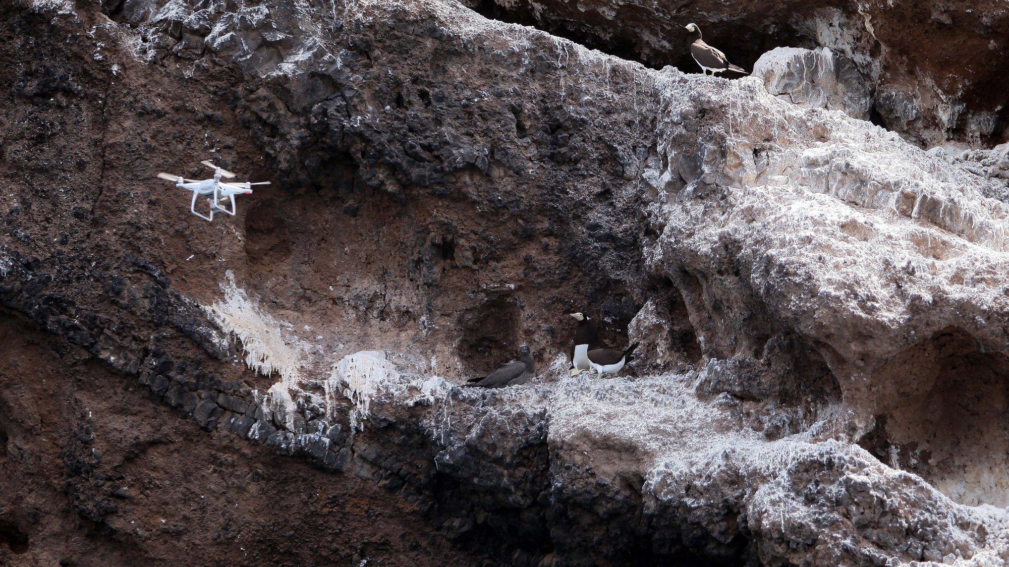 Uma parceria entre a Universidade do Algarve e a organização não-governamental cabo-verdiana Lantuna está a permitir vencer, com drones, a inacessibilidade das falésias da Baía do Inferno, ilha de Santiago, para poder acompanhar a reprodução dos alcatrazes, Praia, Cabo Verde, 19 de março de 2021. Com falésias costeiras que chegam aos 577 metros de altura, como é o caso do Monte Angra, a área da Baía do Inferno, entre os concelhos de Santa Catarina e Ribeira Grande, conjuga a presença de umas das maiores biodiversidades do arquipélago, desde logo em aves marinhas, com a inacessibilidade em algumas zonas. (ACOMPANHA TEXTO DE 23 DE MARÇO DE 2021). FERNANDO DE PINA/LUSA
