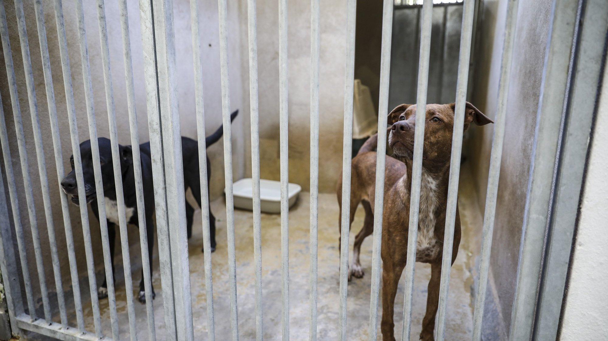 Dois cães na sua gaiola na Casa do Animal da Câmara Municipal de Lisboa, 24 de agosto de 2020. JOSÉ SENA GOULÃO/LUSA
