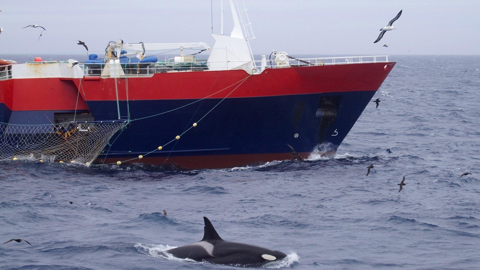 Orca perto de embarcação