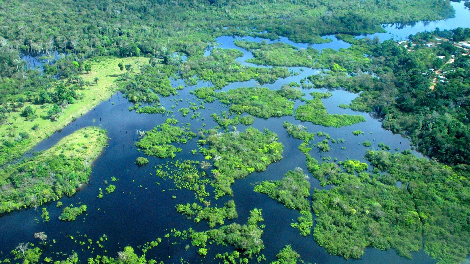 """O cenário de políticas públicas para a Amazónia este ano """"não foi positivo"""", alerta o activista ambiental da organização não-governamental Greenpeace ao defender a necessidade de redireccionar investimentos em actividades sustentáveis na floresta, Amazonas, Brasil, 21 de novembro de 2008.  (ACOMPANHA TEXTO)  FABIOLA DOS SANTOS/LUSA"""