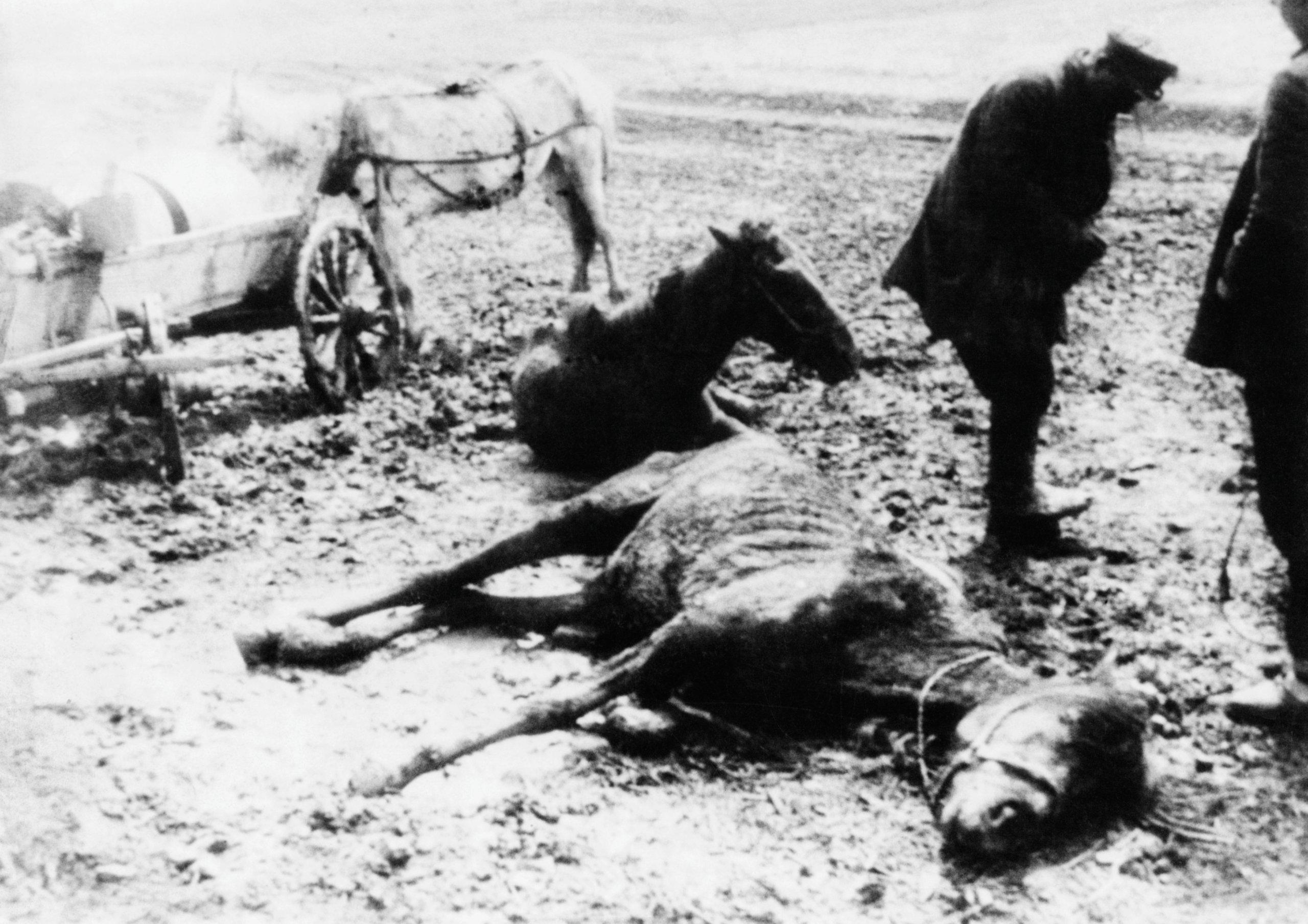 Famine In Ukraine