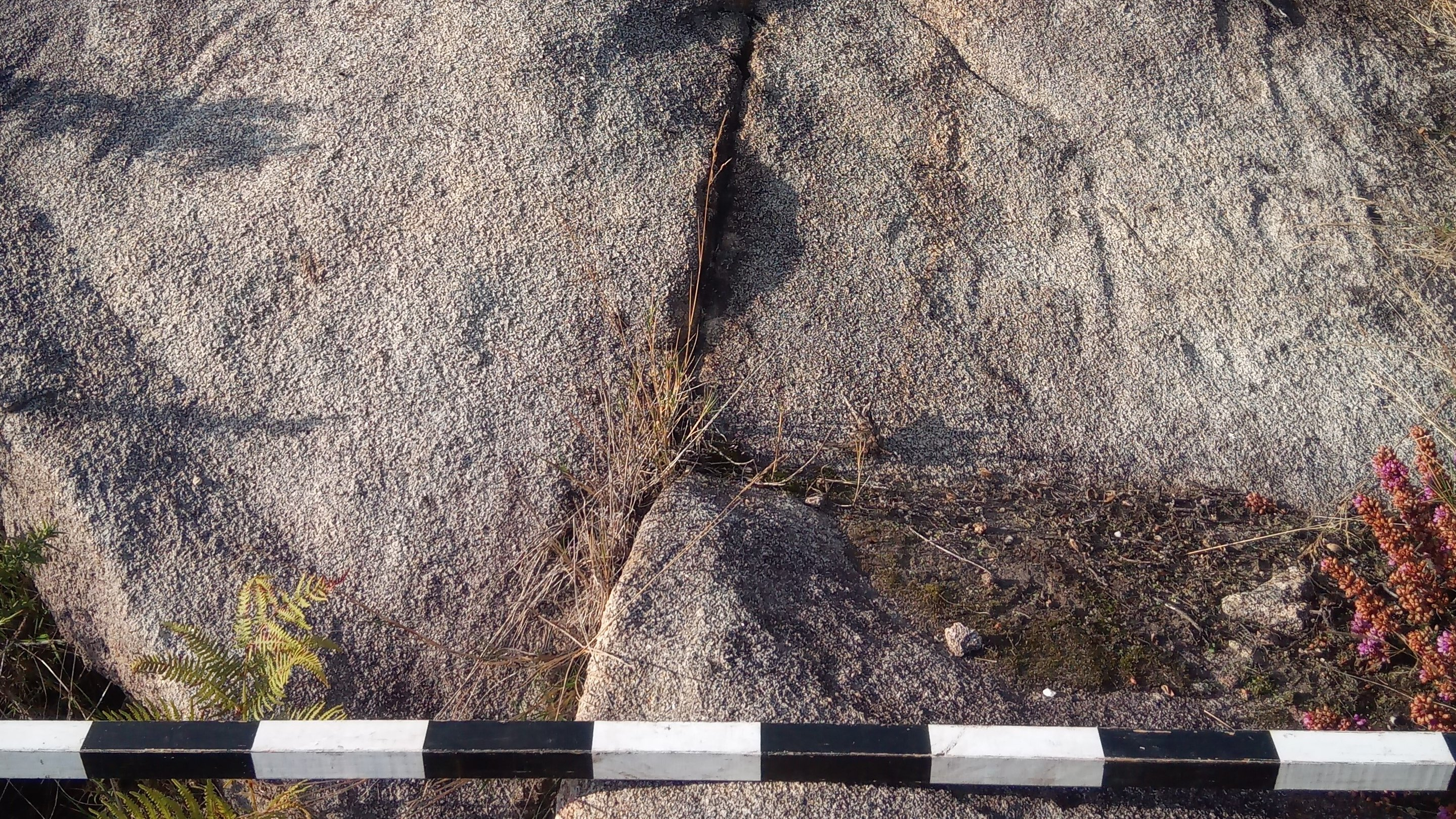 Descobertas 50 estações de arte rupestre de ar livre em Paredes de Coura
