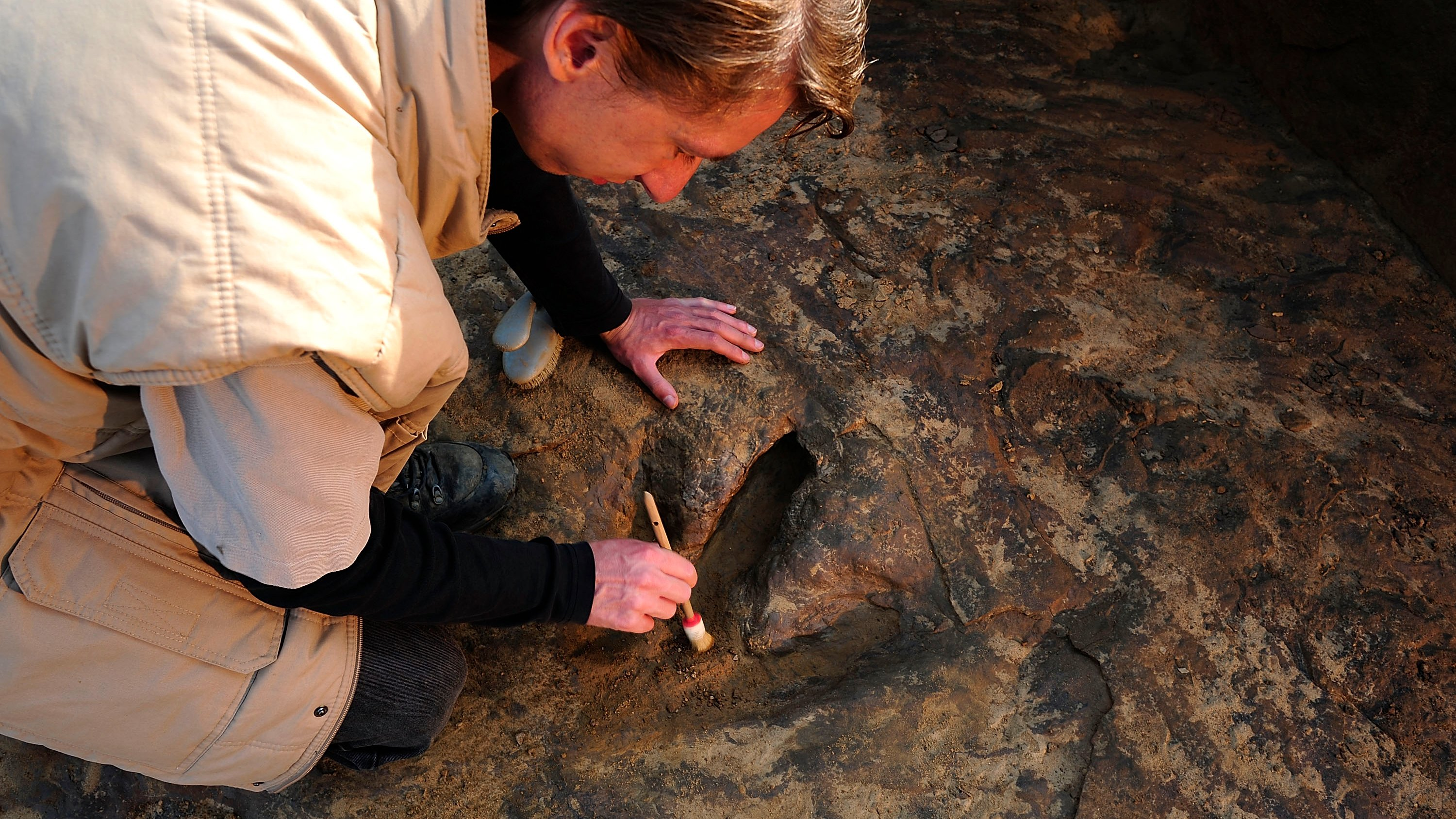 Archaeologists Discover 90 Dinosaur Footprints