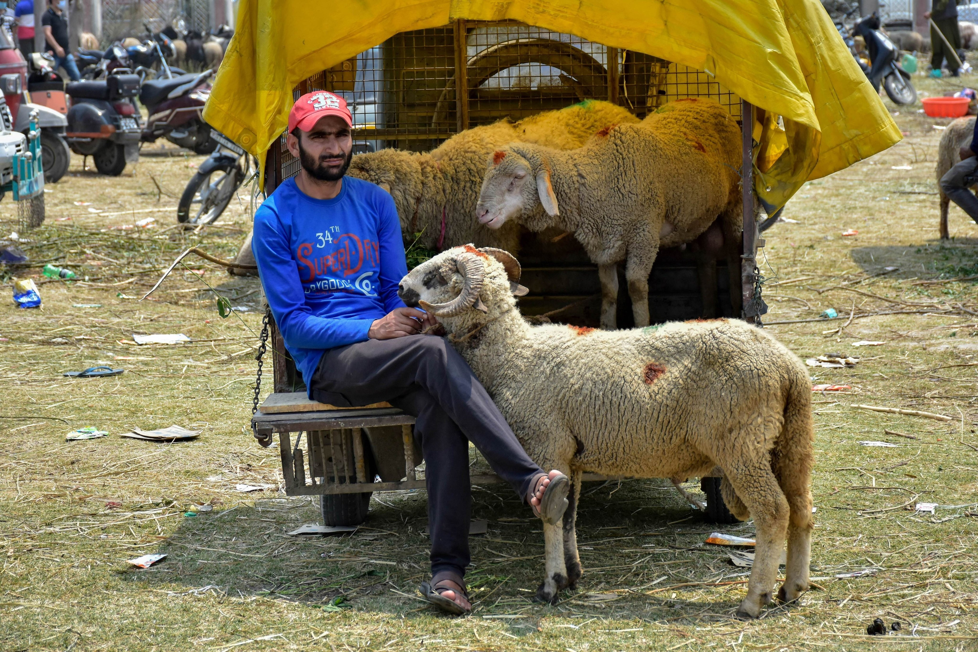 A Kashmiri livestock trader waits for customers ahead of the