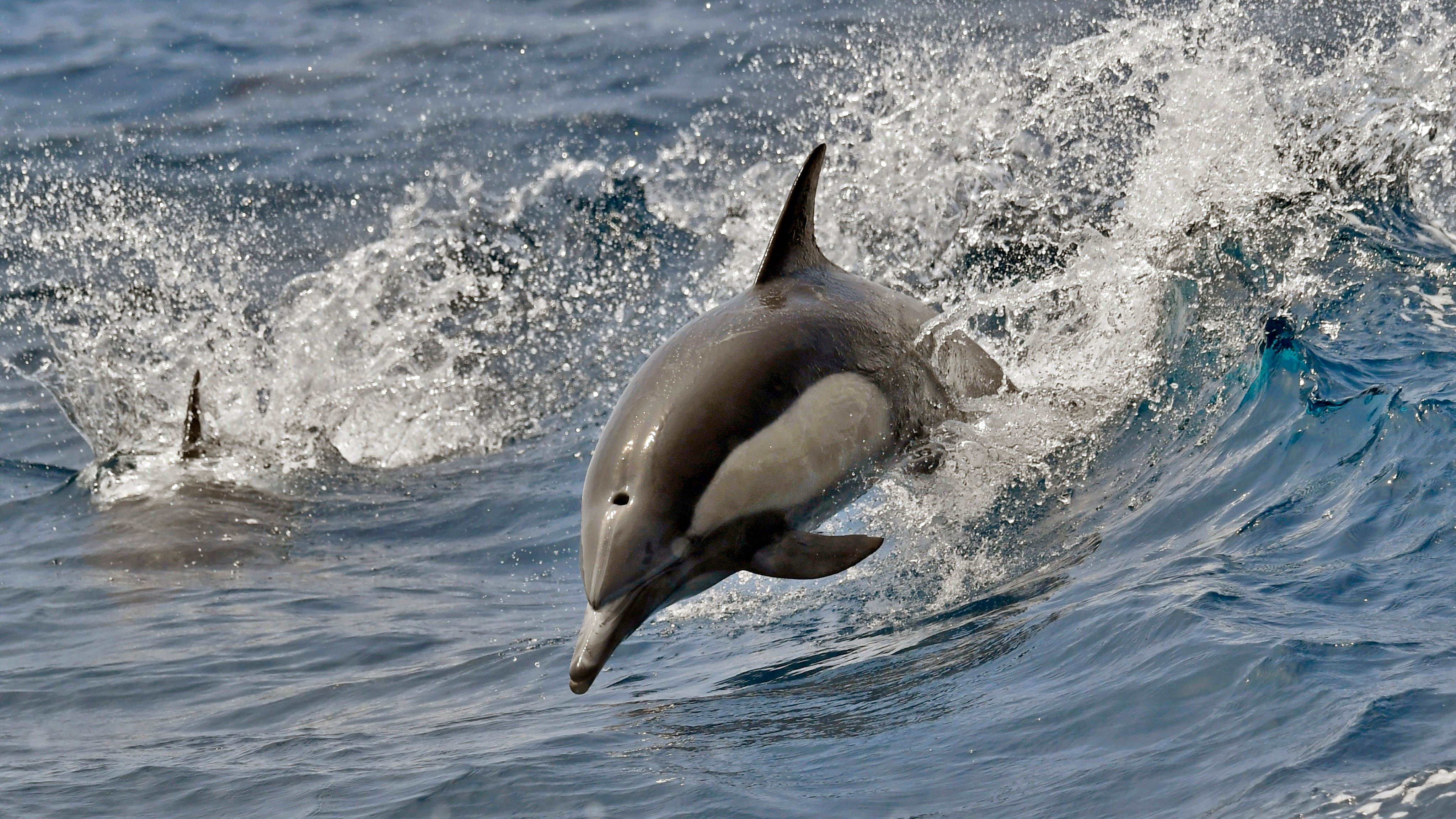 dolphin jumps out of water