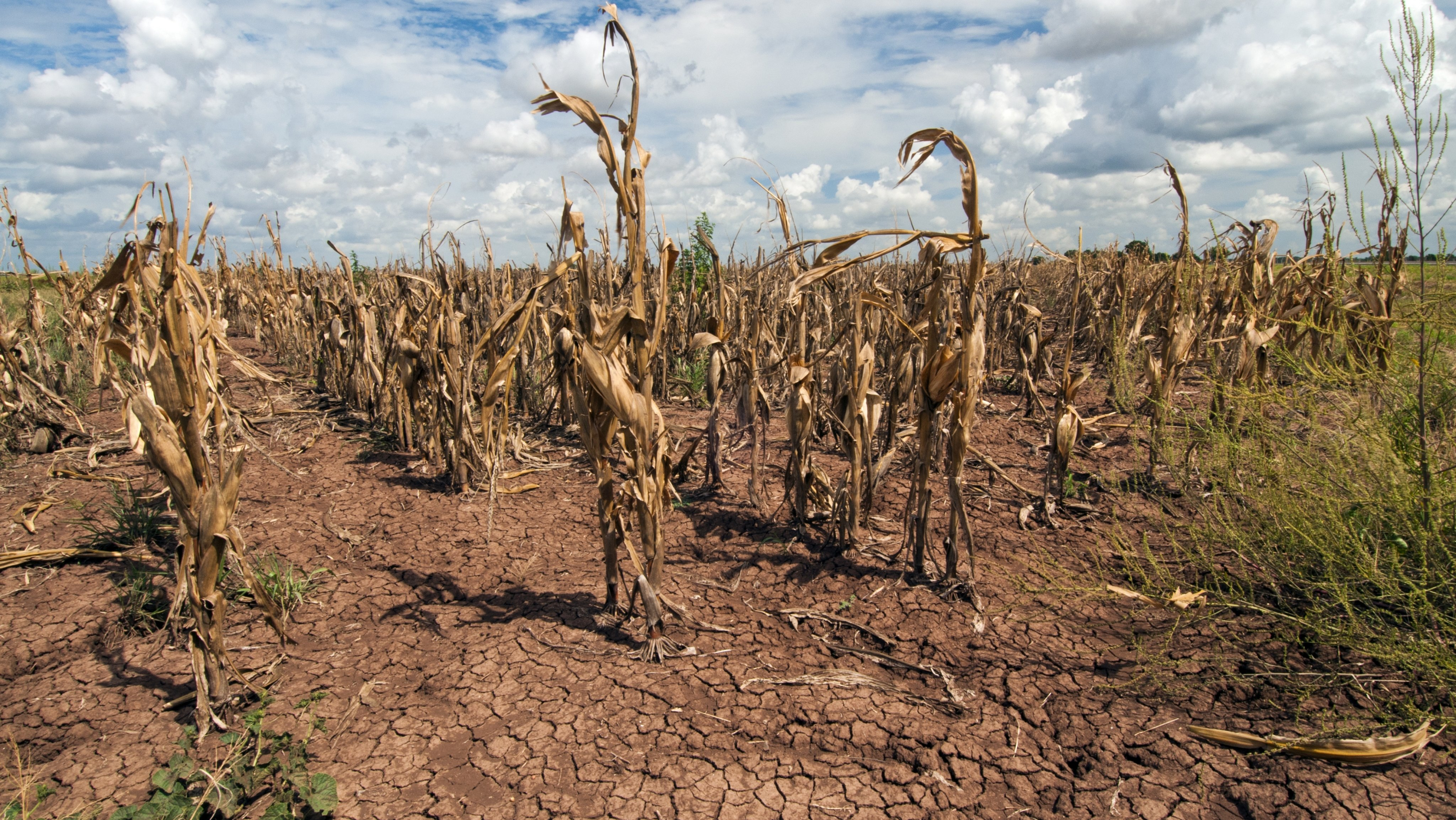 Crops Effected By Drought