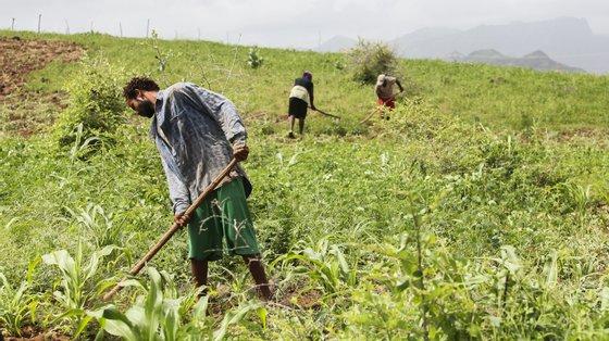 """""""Se não aumentar o preço a que vendemos a nossa produção e se a situação se mantiver, serão cada vez menos os agricultores que conseguem resistir"""""""