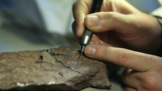 """""""Este plesiossauro é o mais completo e antigo da Península Ibérica, datado do início do Período Jurássico"""", dizem investigadores"""