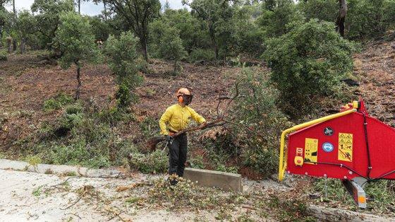 """O Sindicato Nacional da Proteção Civil refere que os sapadores florestais têm o salário """"mais baixo da proteção civil"""" ao auferirem o ordenado mínimo."""