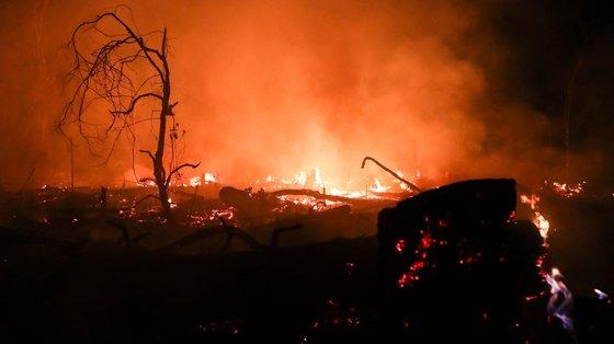 A amazónia sofreu 11.862 incêndios entre janeiro e julho, uma redução de 25% face aos primeiros sete meses de 2020