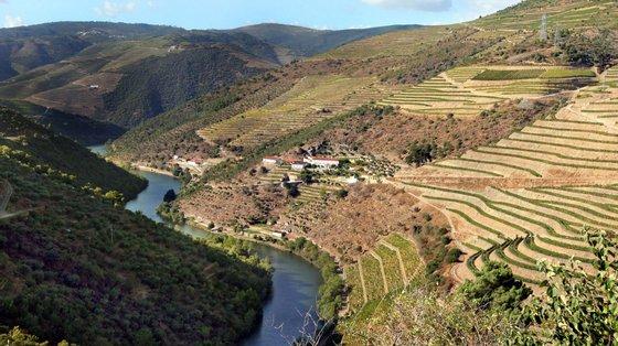 """O Governo afirma que o setor do vinho registou """"um aumento significativo das exportações""""."""