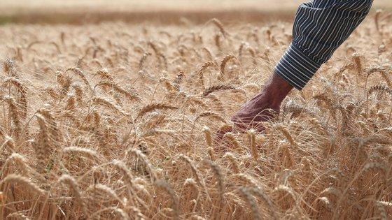 Os dois documentos preveem um pagamento de 850 euros para o regime da pequena agricultura, sendo que a decisão final é de 1.000 euros