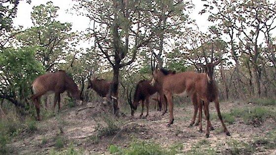 De acordo com o Presidente angolano, ao assinar este protocolo, Angola continuará empenhada no combate aos crimes ilegais contra a vida selvagem
