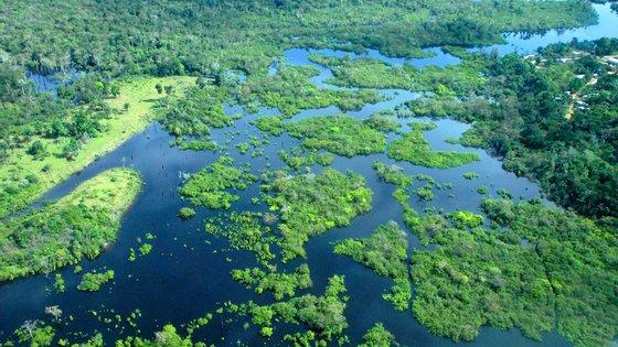A ideia é promover a participação do setor privado na conservação da biodiversidade da maior floresta tropical do mundo