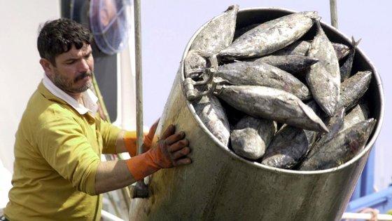 """""""Considerando os dados atuais das descargas efetuadas pela frota portuguesa da espécie atum patudo ('Thunnus obesus') no oceano Atlântico, verifica-se que a quota atribuída a Portugal encontra-se esgotada"""", lê-se numa nota esta quinta-feira divulgada pela DGRM"""