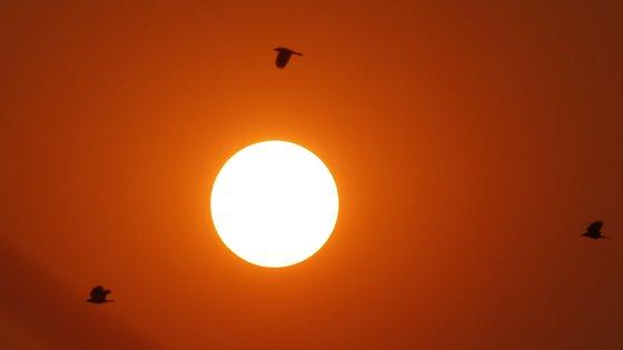 O aumento e a intensificação das ondas de calor em todo o mundo são as manifestações mais claras do aquecimento global