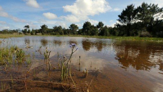 Propõe-se a criação de pontos de água, o recurso a agricultura extensiva e uma maior disponibilidade de refúgios protegidos da atividade humana
