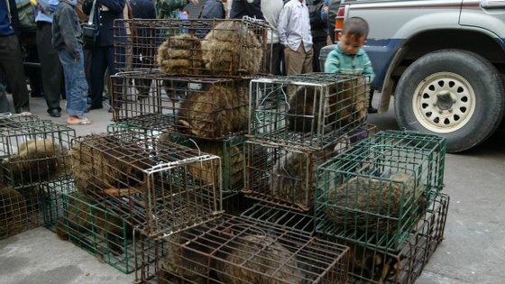 Os mercados de animais selvagens vivos esteve na origem dos surtos de SARS em 2002 e 2003 e pode ter estado na origem da pandemia de Covid-19
