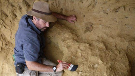 Antes de voltarem definitivamente para a Angola, irão passar por Portugal, podendo já alguns fósseis da espécie ser vistos no Museu da Lourinhã