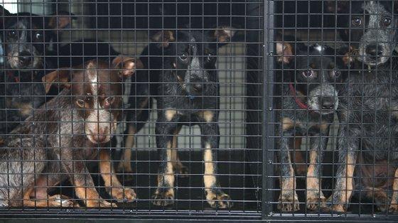 Dez dos 15 cães assassinados eram cachorros