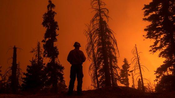 Este verão os fogos florestais já devastaram 9.195 quilómetros quadrados na Califórnia. Esta semana o Parque Nacional da Sequoia, no sul da Sierra Nevada, teve de ser evacuado