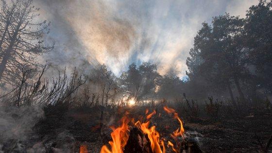 """Luís Paulo Costa relembra que """"os incêndios florestais que assolaram o concelho de Arganil e a região vieram demonstrar a vantagem de se criar um Centro com estas características"""