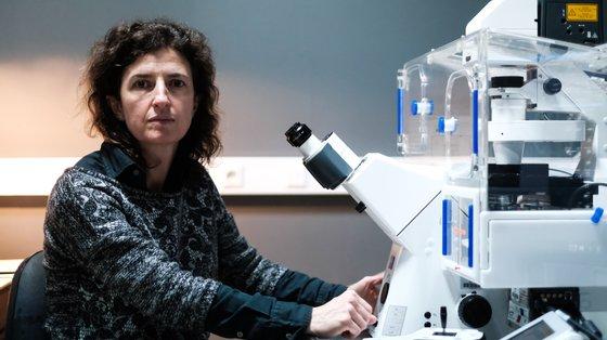 Investigadora, professora e vice-presidente do CNC, Ana Luísa Carvalho é licenciada em Bioquímica pela Universidade de Coimbra, fez investigação na Faculdade de Medicina da Universidade Johns Hopkins, nos EUA, e trabalhou na University of British Columbia, no Canadá