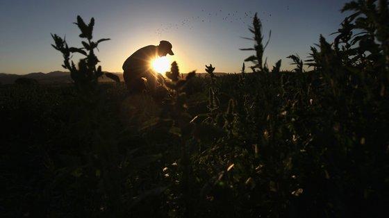 Para a CNA, este critério vai excluir a grande maioria dos agricultores familiares, indo contra os objetivos anunciados