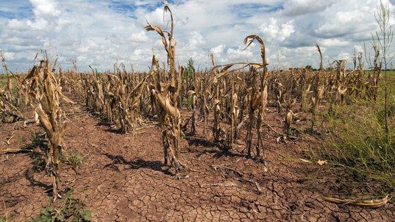 Grande parte das regiões do Baixo Alentejo e do Barlavento Algarvio estavam em seca moderada, enquanto as zonas de Alvalade do Sado e do Sotavento Algarvio em seca severa, precisa o documento