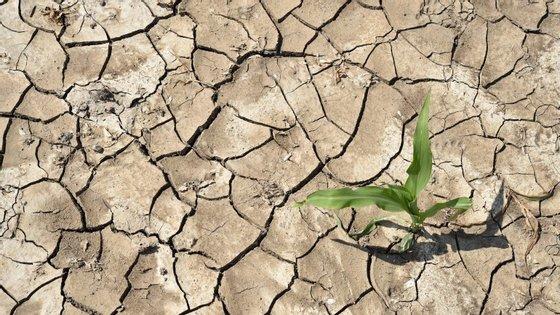Dados provisórios relativos a 2014 mostram que 14 dos 15 anos mais quentes registados ocorreram todos no século XXI