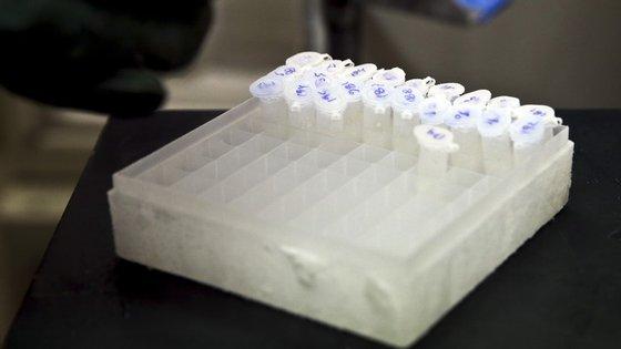 """Um comunicado conjunto, da câmara de Sines e da Autoridade de Saúde do Alentejo Litoral, refere que """"não há casos de doença a registar"""""""