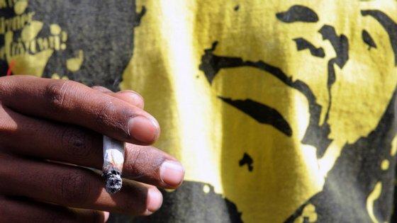 A comunidade rastafari será autorizada a utilizar, legalmente, a planta nas suas práticas religiosas