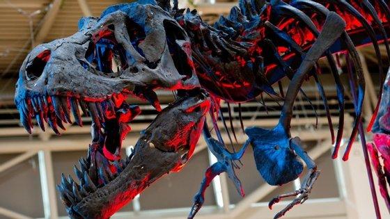 Os dinossauros viveram há mais de 230 milhões de anos