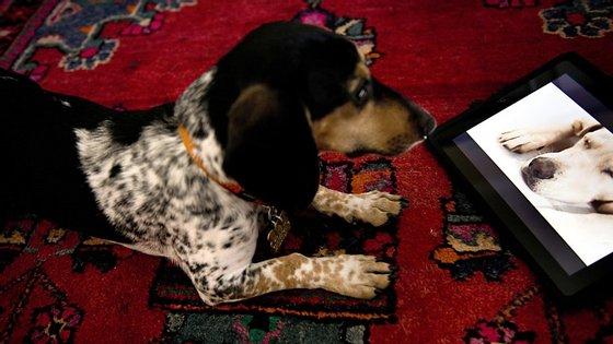 A apresentadora e veterinária Sara Calisto conversou com o Observador para explicar o projeto DOG TV disponível no canal 250 da NOS