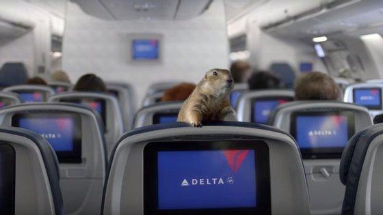 O esquilo dramático num avião da Delta Airlines. Veja o vídeo e descubra mais de 20 outros fenómenos virais.