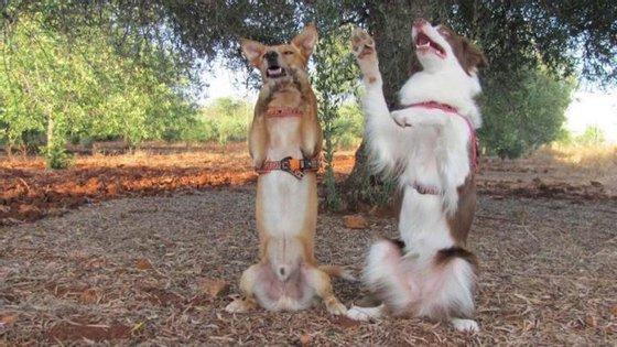 Haverá 'workshops' sobre comportamento e treino canino, festas de aniversário caninas, feiras de adoção de animais, encontros de raças e 'cãominhadas'.