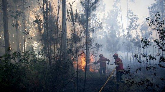 """O incêndio progride esta manhã """"em local de difícil acesso aos veículos de combate"""", segundo a ANPC."""