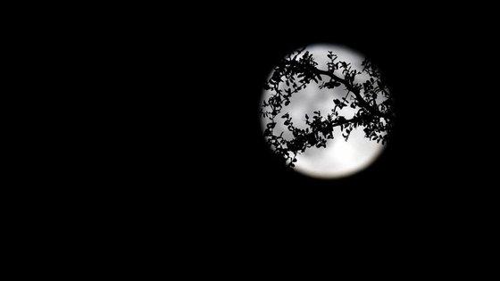 Caso perca o fenómeno esta sexta-feira, saiba que a próxima lua azul só volta a acontecer em 2018