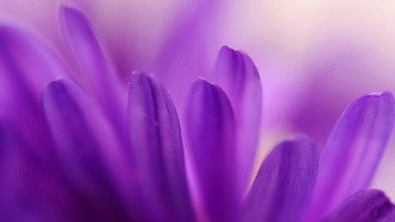 A cor púrpura já podia ser encontrada na natureza, mas era tão rara na roupa que foi considerada exclusiva da realeza