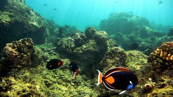 Os corais são animais invertebrados e têm um papel importante na absorção de dióxido de carbono