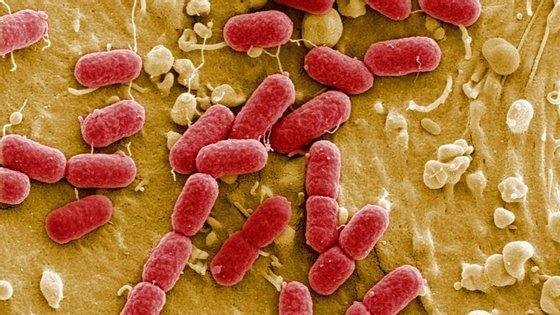 A principal preocupação das autoridades é que este seja o princípio do fim da era dos antibióticos e que a bactéria evolua para infeções mais graves e que a medicina tradicional não consiga tratar.