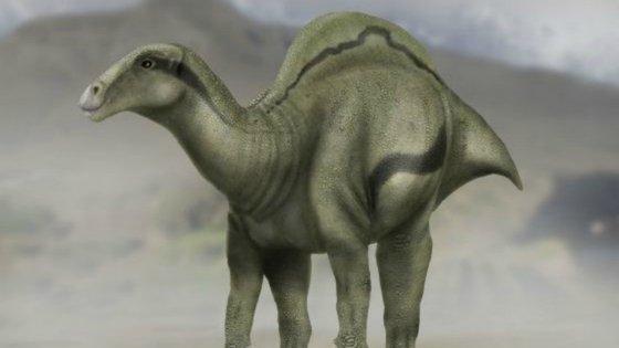 O Morelladon beltrani pertencia ao género Iguanodon que se caracterizava por uma espécie de vela presente nas costas. Este andava por Espanha, mais concretamente no município de Morella.
