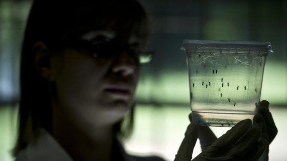 Sem controlar os mosquitos, é mais praticamente impossível controlar a doença
